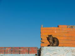A cat sit on the wooden boat Stock Photos