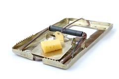 metallic mousetrap with cheese - stock photo