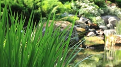 Sedge on a background of a mountain stream - stock footage