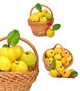 Ripe quince in the basket Stock Photos