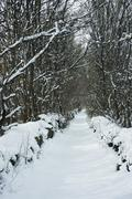 Tree-lined path in snow - stock photo