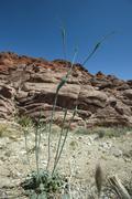 Rocky desert landscape, focus on plant - stock photo