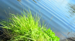 closeup of riverbank vegetation - stock footage
