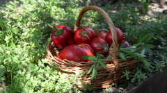 Hands putting red grapes in a basket, fresh vegetables, garden, tomatoe Stock Footage