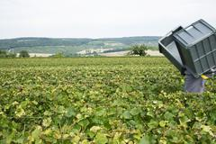 France, Champagne-Ardenne, Aube, wine harvester carrying plastic bins in Stock Photos