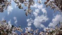 Cotton field Stock Footage