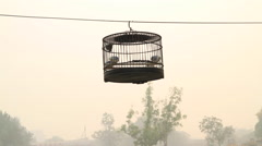 Traditional bird cage hanging from a tree on a foggy day in Beijing, China Stock Footage