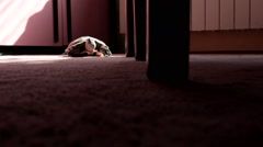 turtle on floor under table. Dark, light. Wide shot. - stock footage