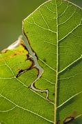 Damaged leaf, close-up Stock Photos