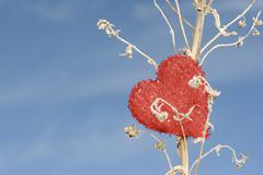 Heart shaped ornament on dried plant stalk Stock Photos