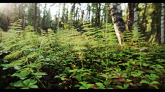 Fern Forrest - Alaska Early Fall 1 Ultra HD 5K Stock Footage