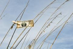 One million dollar bill hung on tall grass with clothes pin - stock photo