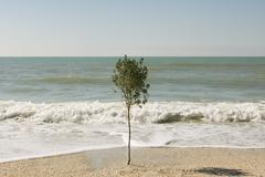 Solitary tree growing on beach near water's edge - stock photo