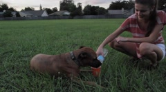 Large dog drinking water Stock Footage