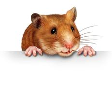 cute hamster - stock illustration