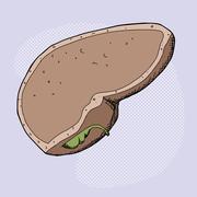 Human gall bladder Stock Illustration