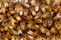 bees and beehive honey - stock illustration