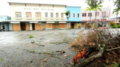 Stock Video Footage of Hilo tree damage building flood prevention tropical storm Iselle Hawaii