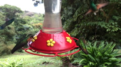 Hummingbird at feeder 120 FPS 5 Stock Footage