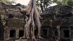 Tree on Top of Ruins at Ta Prohm Temple, Angkor, Siem Reap, Cambodia Stock Footage