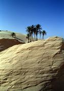 Tunisia, Sahara Desert, palm trees on large rock in front of dunes Kuvituskuvat