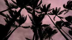 Palm trees Tropical storm Cyclone landfall Hilo town Big Island - stock footage