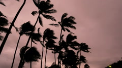 Palm Trees Hurricane Iselle storm force winds landfall Hawaiian Islands Stock Footage