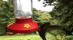 Hummingbird at feeder 120 FPS Stock Footage