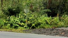 Hawaiian Hurricane damage Iselle Hilo landfall Big Island Pacific Ocean - stock footage