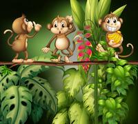 Monkeys - stock illustration