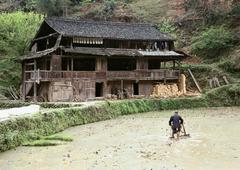 China, Guangxi Autonomous Region, man plowing rice paddy, old house on bank - stock photo