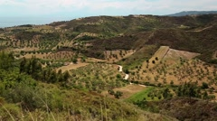 Olive plantations near Nea Skioni village on Kassandra peninsula, Greece Stock Footage