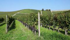 Country agriculture fields vineyards in Piedmont Piemonte Italy Italia Stock Footage