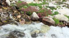 Alpine Stream and Wildflowers - stock footage