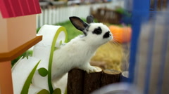 A pet rabbit is displayed at a shopping mall in Beijing Stock Footage