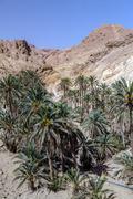 Oasis chebika sahara desert, tunisia, africa Stock Photos