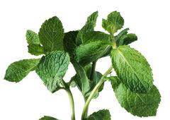 Mint leaves, close-up Stock Photos