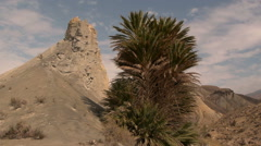 Rock and palm tree with blue sky Stock Footage