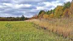 Autumn meadow near forest Stock Footage