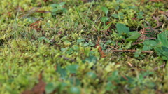 Mushroom in forest litter Stock Footage