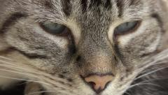 close up and tilt down of eyes and whiskers of female cat - stock footage