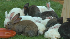 Rabbits on the farm Stock Footage