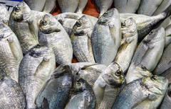 fresh fish in a market - stock photo