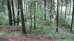 4k Forest hiking in low mountain range Harz Stock Footage