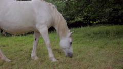 White Horse Grazing, Ireland Stock Footage