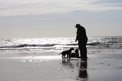 A person with two dogs on a glimmering sandy beach in sunshine Stock Photos