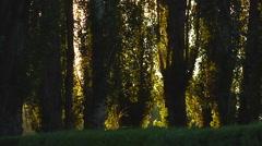 LE Scenic 01 - Estancia Poplars in Sunlight Stock Footage