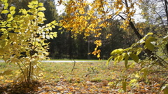 Boy rides a bicycle in autumn Stock Footage