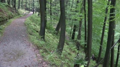 4k People hiking in forest of low mountain range Harz - stock footage