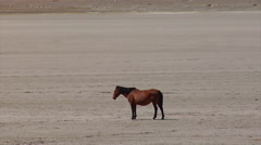 Rio Pico Scenic 04 - lone horse on playa Stock Footage